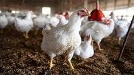 اگر زودتر فکری نشود با کمبود گوشت مرغ در ایران مواجه میشویم