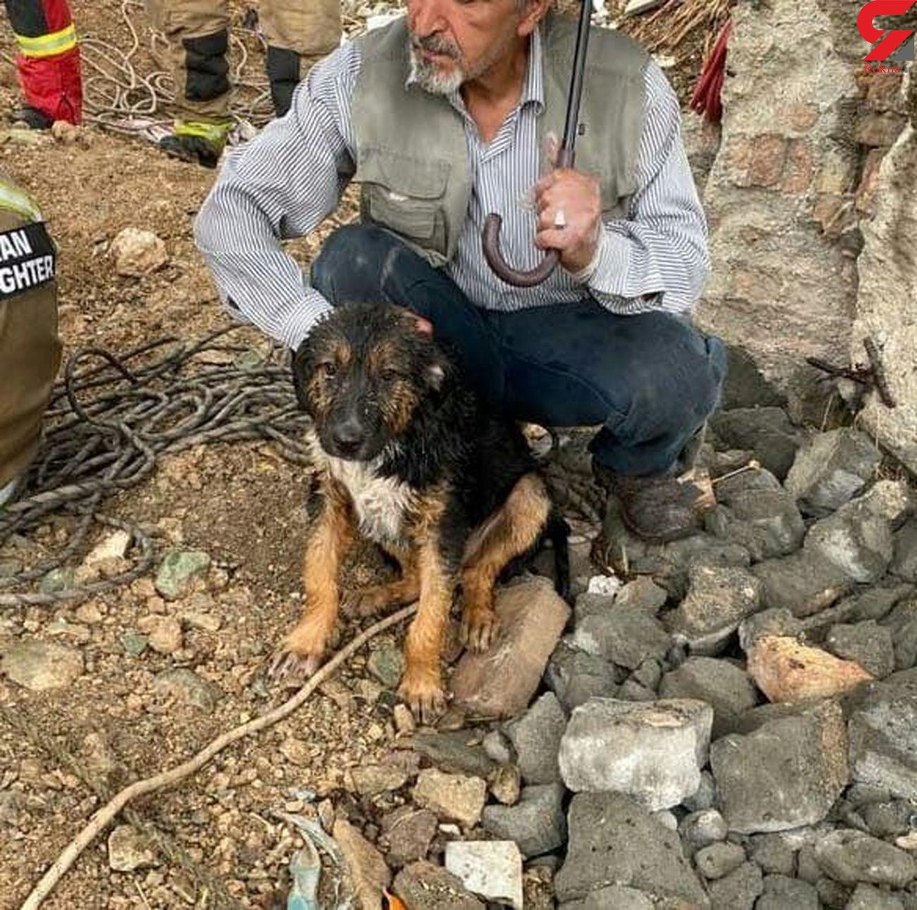 نجات توله سگ از عمق 15 متری چاه / توسط ماموران آتش نشانی تهران + عکس