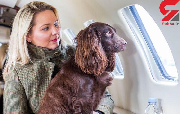 جت خصوصی برای حیوانات خانگی ثروتمند