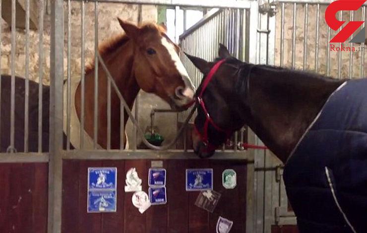 فیلم عجیب از کمک یک اسب به اسب دیگر برای فرار از اسطبل+ تصاویر