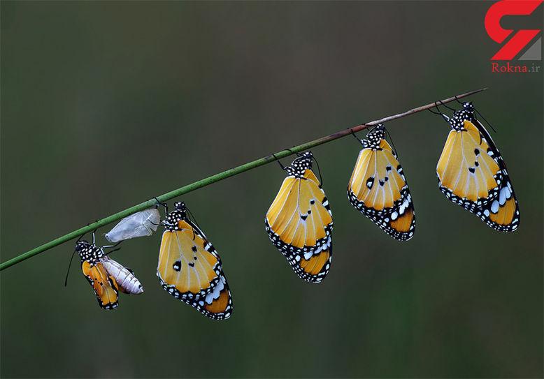 زایشگاه پروانهها