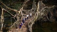 پل زنده هیجان انگیزترین جاذبه گردشگری در هند