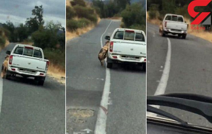 تعقیب سگآزار در جاده باریک با دوربین موبایل