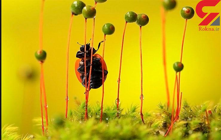 در سرزمین گیاهان عجیب