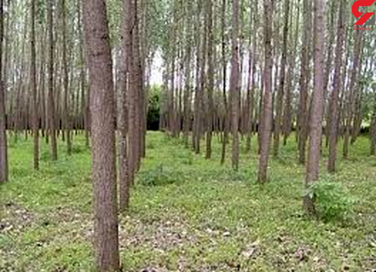کشف 8 هزار متر زمین خواری در سرپل ذهاب/ یک نفر دستگیر شد