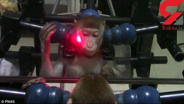 آموزش میمونها برای تشخیص چهره خود در آینه