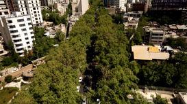 مستند چنار های خیابان ولیعصر تهران که با سانسور در تلویزیون پخش شد+فیلم و عکس