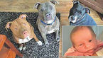 سگ های وحشی، دختر بچه را خوردند! + عکس