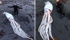 تصویر وحشتناک هیولای 20 متری کشف شده+عکس