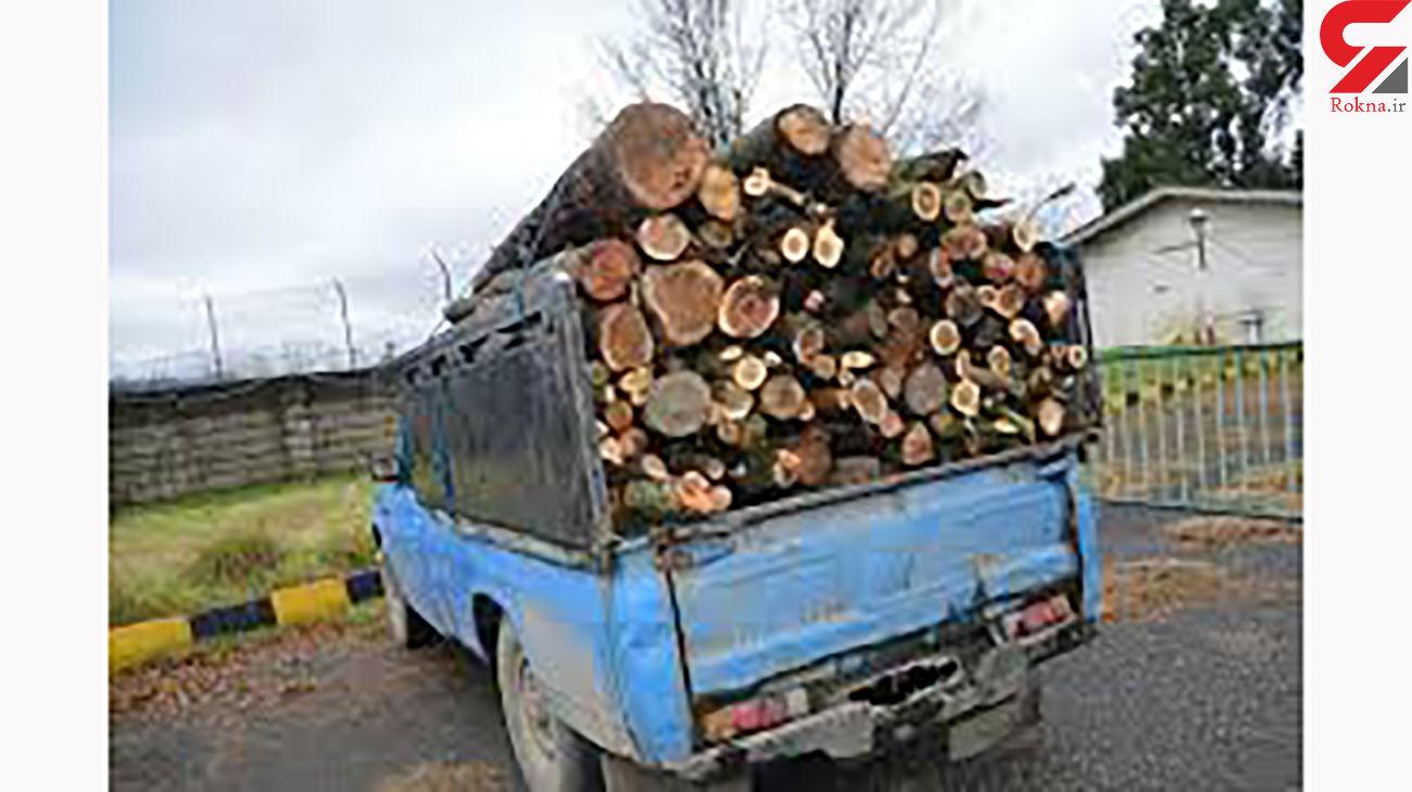 دستگیری قاچاقچی درختان جنگلی در رستم