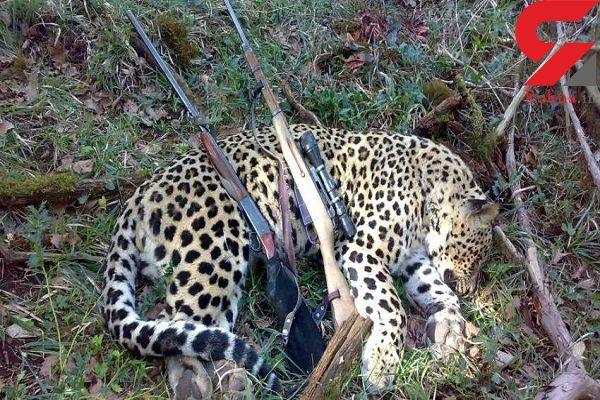 عکسی تلخ از شکار یک پلنگ زیبا در مازندران + جزییات دستگیری شکارچیان