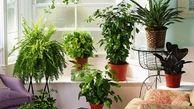 روش های مراقبت از گیاهان در هوای گرم تابستان