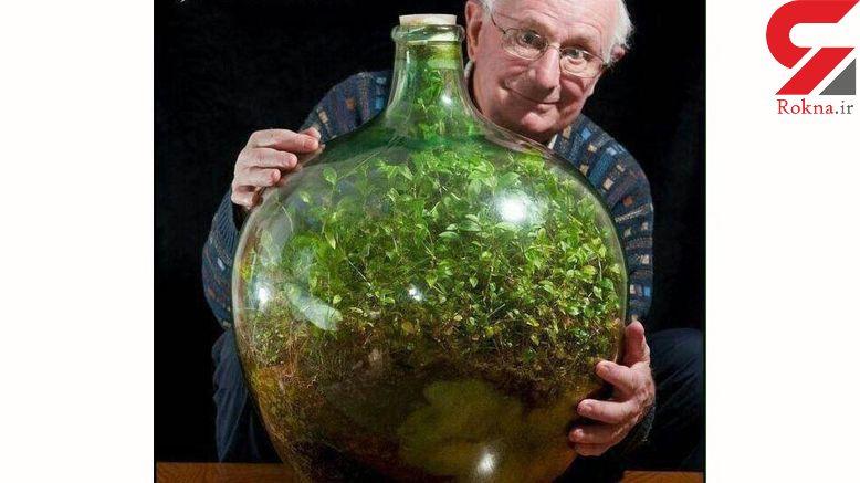 این گیاه بیش از 50 سال بدون آب زندگی می کند