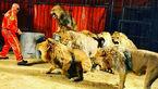 روایتی از پیرترین شیر دنیا در ایران + عکس