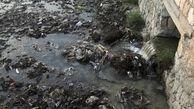 آلودگی خلیج فارس به 40 برابر استاندارد رسیده است / ایجاد کویرهای دریایی در تنگه هرمز