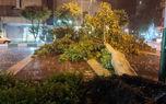 طوفان مازندران درختان، گاز و برق را قطع کرد
