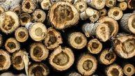 کشف ۱۶ اصله چوب آلات قاچاق در عباس آباد