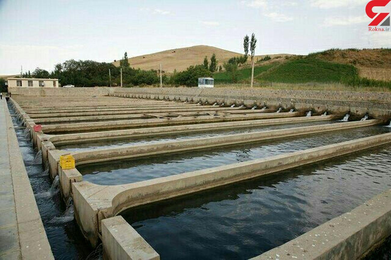 تولید ۲۱۰۰ تن ماهی در نیمه نخست امسال در کردستان