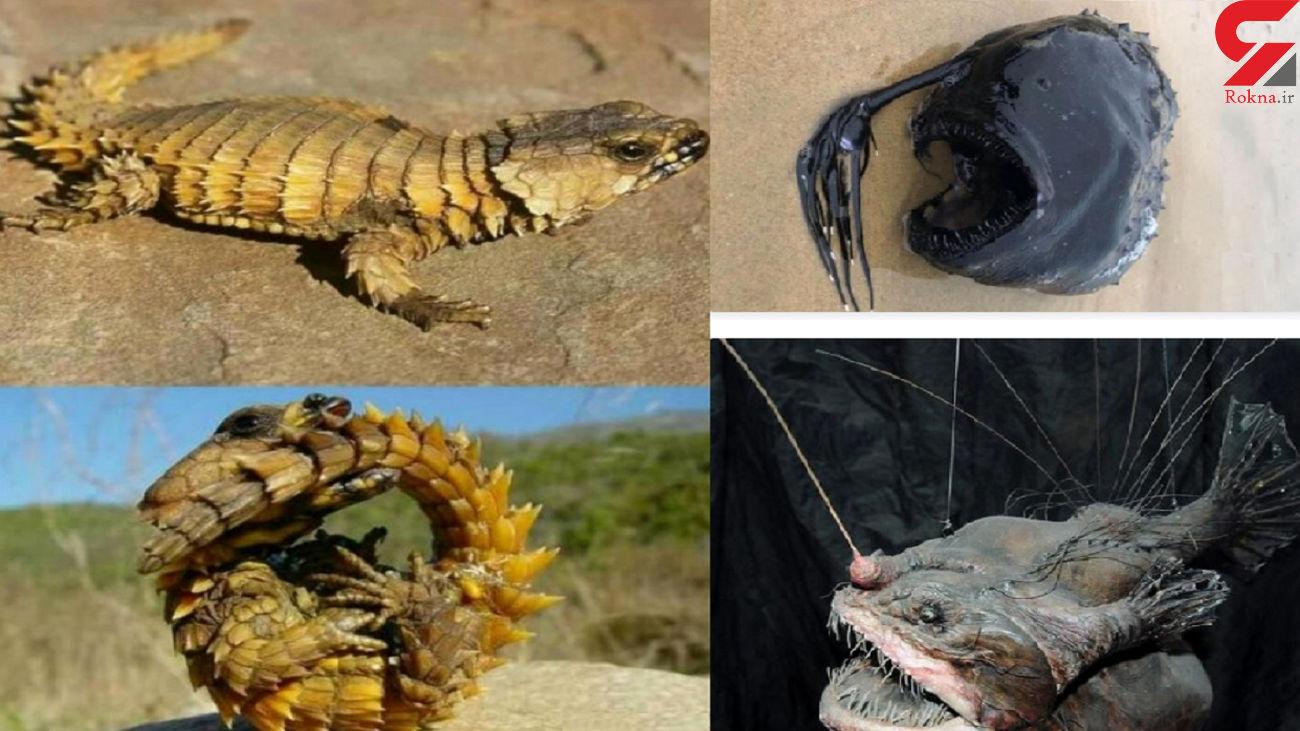 از این جانوران نترسید! + عکس