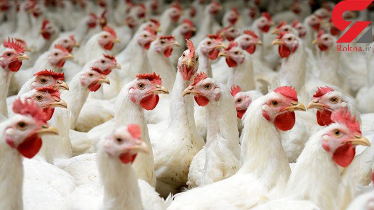 تخلف 29 میلیاردی مرغداران در لرستان
