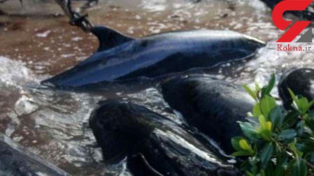 مرگ تکان دهنده و مشکوک 72 دلفین + عکس