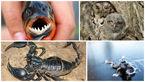 شگفت انگیزترین حیوانات / از زیباترین تا ترسناک ترین ها+عکس