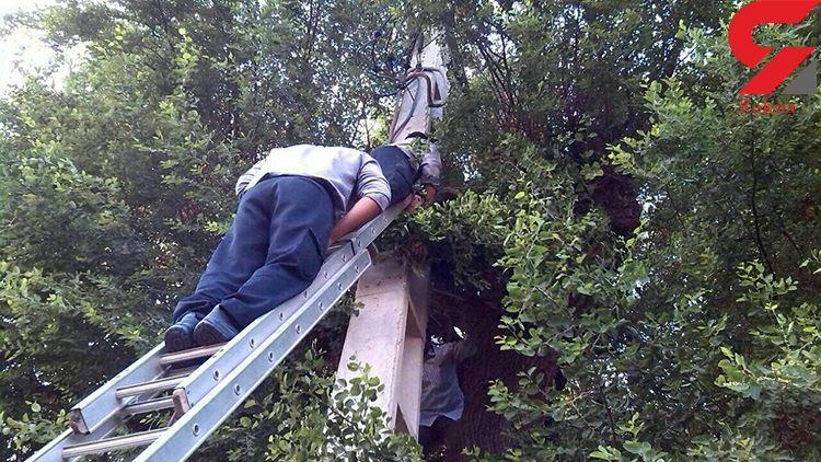 مرد 35 ساله کرجی درجا خشکش زد / کشف یک جسد روی درخت+ عکس عجیب