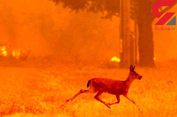 هشدار نابودی جانداران با گرمایش زمین