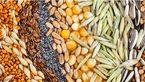 تاثیر مثبت برنج وحشی در سلامتی/دانه های شگفت انگیز که در سلامتی معجزه می کنند
