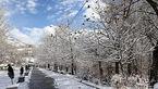 برف و باران در راه است / تهران کی برفی می شود؟