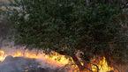 آتش سوزی هولناک در منطقه گلیل شیروان
