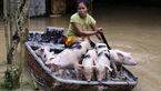 خوک سواری با قایق توسط زن جوان ! +عکس