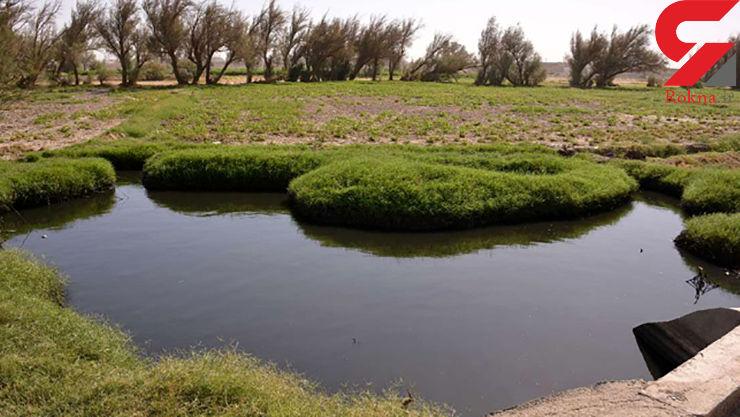 کشاورزی با آب فاضلاب در جنوب تهران