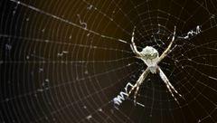 کشف حقیقتی عجیب درباره زندگی عنکبوت ها