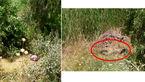 عکس های تکاندهنده از اجساد گلوله باران 2 جوان دهدشتی / فرضیه قتل ناموسی