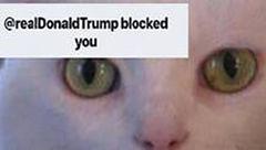 ترامپ گربه را در توییتر بلاک کرد+عکس