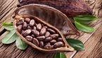 هزار و یک خاصیت پنهان در کاکائو
