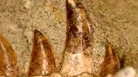 شناسایی دایناسور 70 میلیون ساله با دندان های جدید در آمریکا