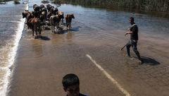 سیل بندها درخوزستان به لرزه افتادند/دسترنج کشاورز درآستانه نابودی