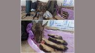 دستگیری شکارچی متخلف در طالقان