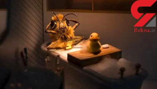 محبوب ترین زنبور عسل در اینستاگرام