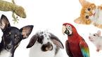 حیوانات خانگی میتوانند ناقل کرونا باشند / مراقب گربه ها باشید + فیلم