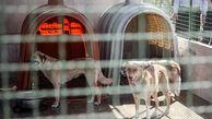 ۲ پناهگاه نگهداری سگهای بلاصاحب در کرج احداث میشود