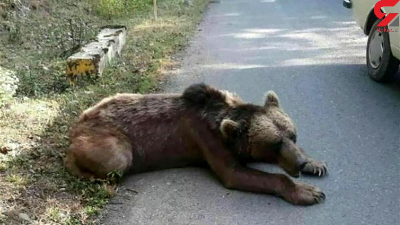 بدشانس ترین توله خرس ایران در دالاهو !+ عکس دیدنی