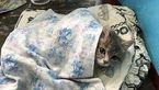 سرماخوردگی گربه ها چگونه است؟ راه های درمان خانگی