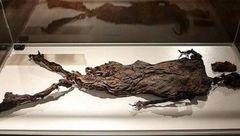 از «مومیایی» 2300 هزار ساله تا «تبر دستی» 50هزار ساله + عکس