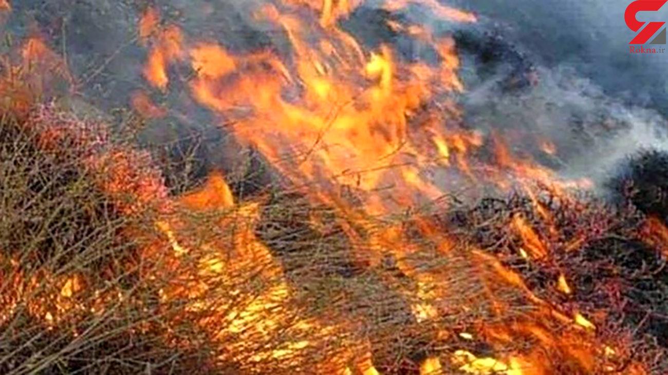 آتش سوزی جنگل های بلوط خوزستان زیر سر 2 طایفه کینه جو بود