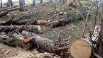 برخورد قانونی با افراد مقصر در موضوع قطع درختان تبریز میشود/ اقامه دعوی در مراجع قضایی