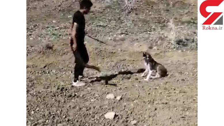 فیلم وحشتناک از حیوان آزاری یک جوان بی رحم ( 14+)