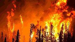 آتش سوزی مرگبار کالیفرنیا: ۷۴ تن کشته و بیش از ۱۰۰۰ نفر مفقود شدهاند